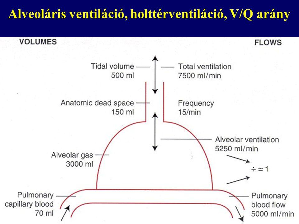 Alveoláris ventiláció, holttérventiláció, V/Q arány