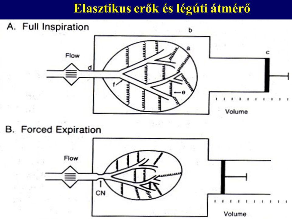 Elasztikus erők és légúti átmérő