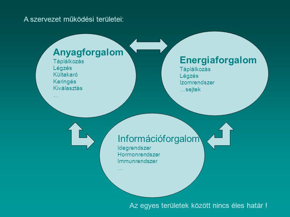 Anyagforgalom Energiaforgalom Információforgalom