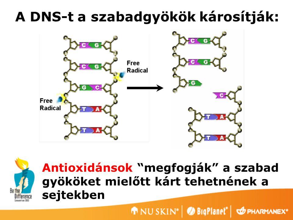 A DNS-t a szabadgyökök károsítják: