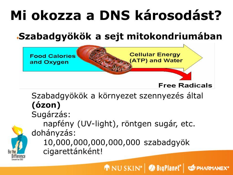 Mi okozza a DNS károsodást