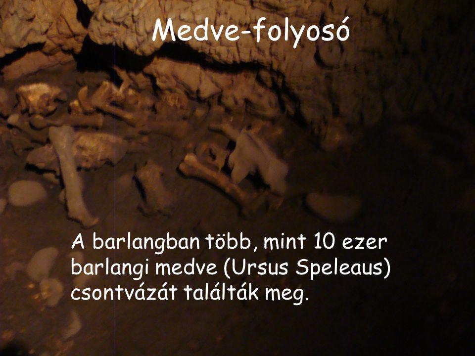 Medve-folyosó A barlangban több, mint 10 ezer barlangi medve (Ursus Speleaus) csontvázát találták meg.