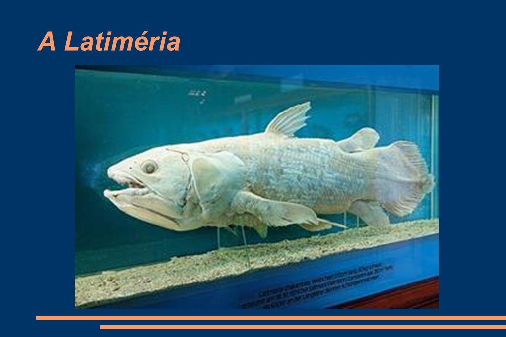 A Latiméria