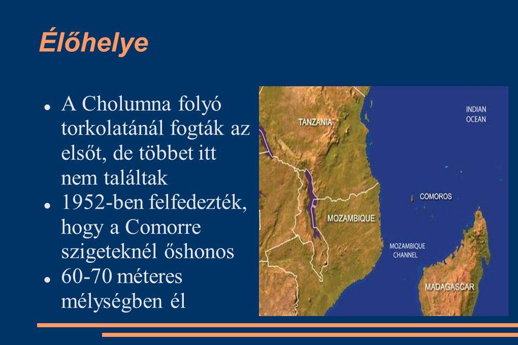 Élőhelye A Cholumna folyó torkolatánál fogták az elsőt, de többet itt nem találtak. 1952-ben felfedezték, hogy a Comorre szigeteknél őshonos.