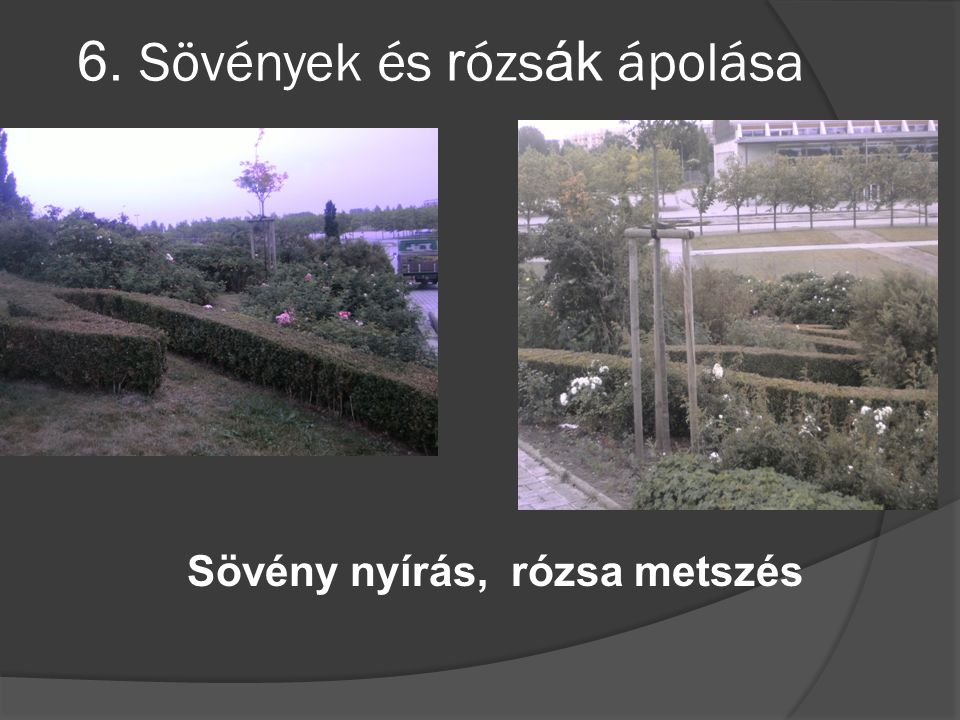6. Sövények és rózsák ápolása