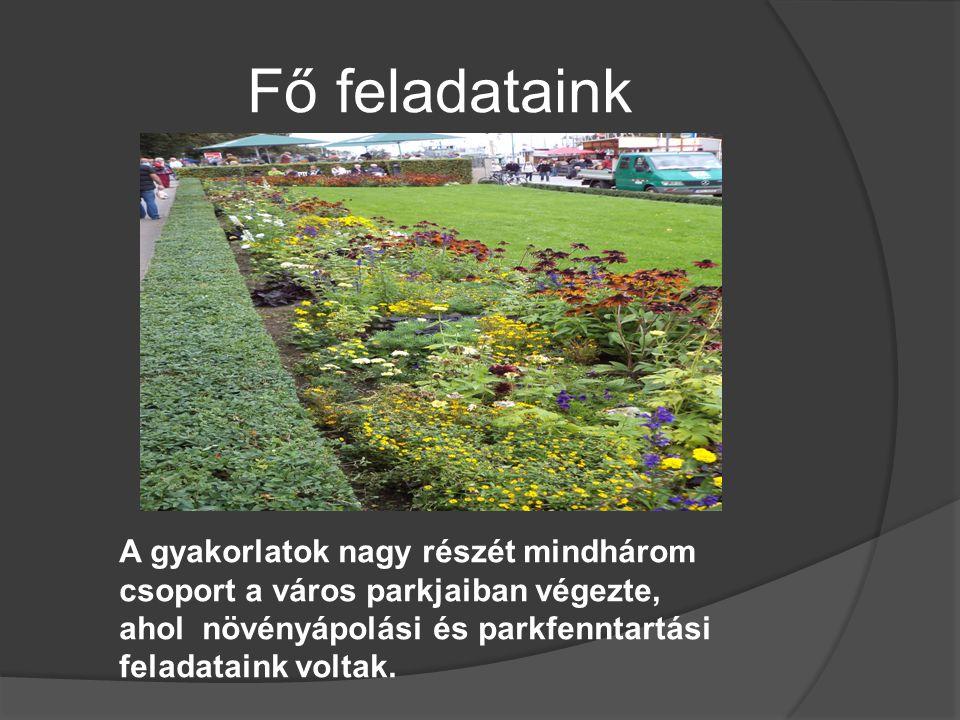 Fő feladataink A gyakorlatok nagy részét mindhárom csoport a város parkjaiban végezte, ahol növényápolási és parkfenntartási feladataink voltak.