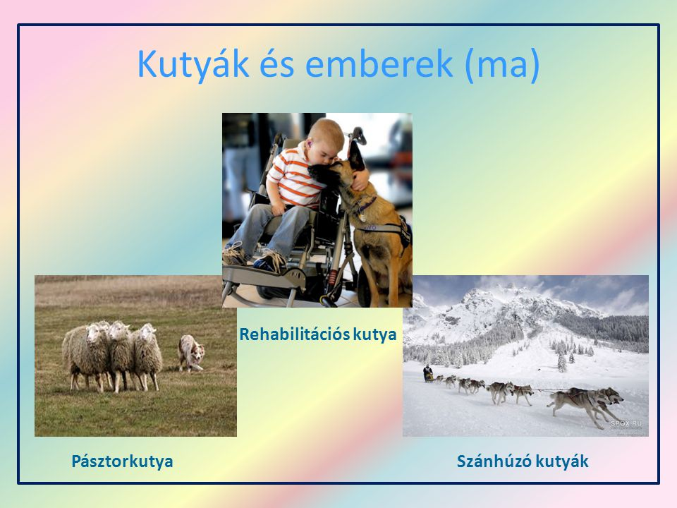 Kutyák és emberek (ma) Rehabilitációs kutya Pásztorkutya