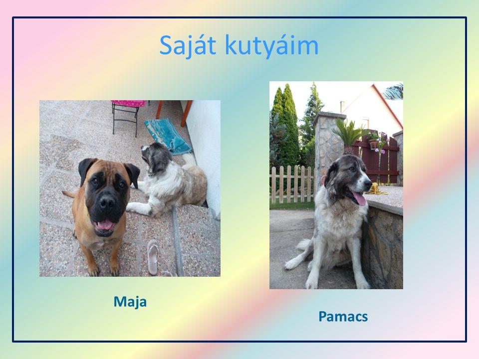 Saját kutyáim Maja Pamacs
