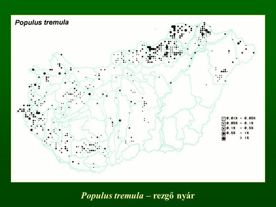 Populus tremula – rezgő nyár