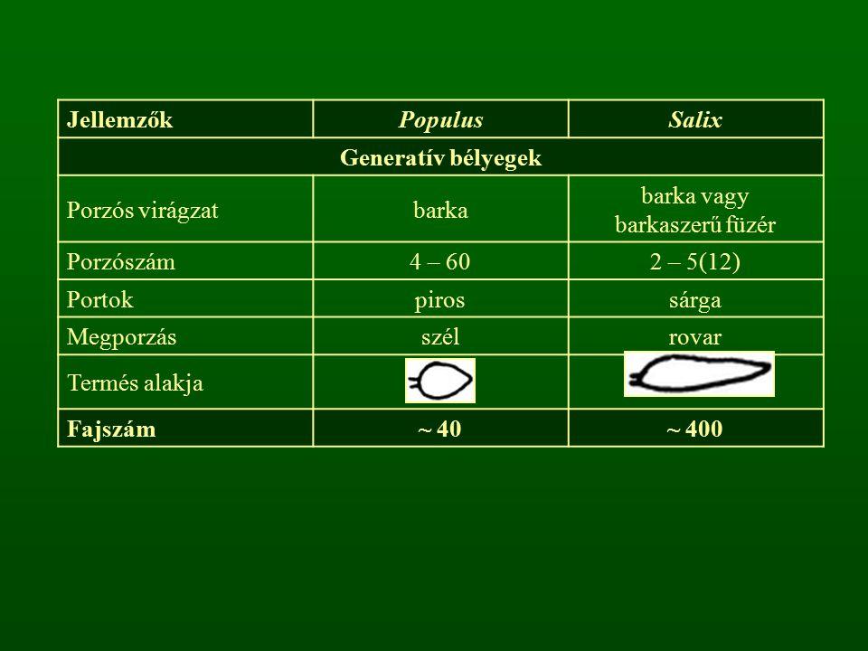 Jellemzők Populus. Salix. Generatív bélyegek. Porzós virágzat. barka. barka vagy. barkaszerű füzér.