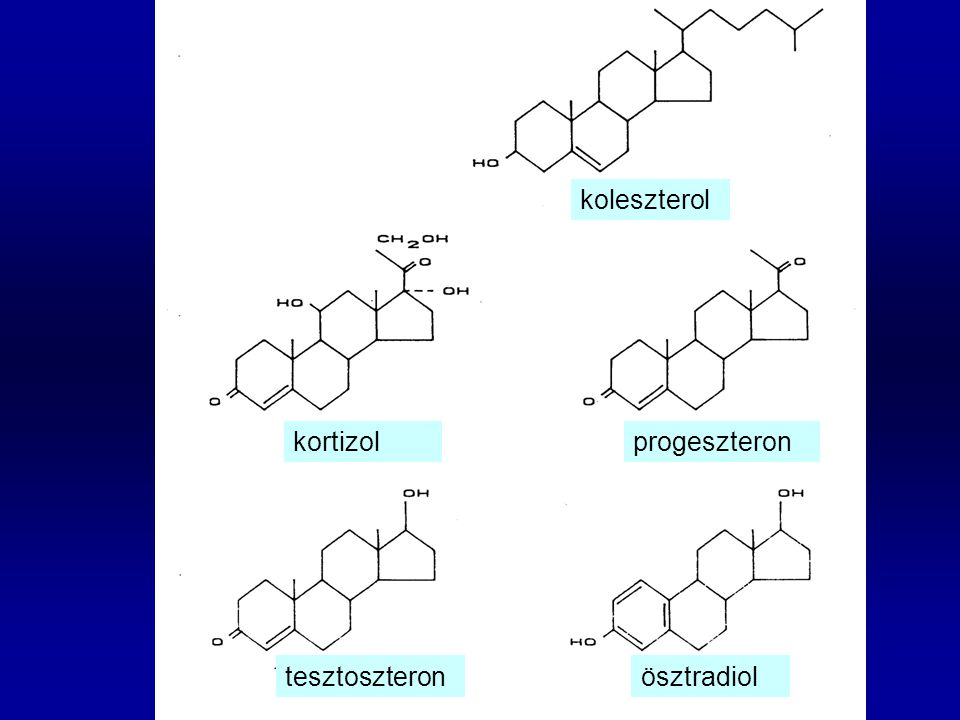 koleszterol kortizol progeszteron tesztoszteron ösztradiol