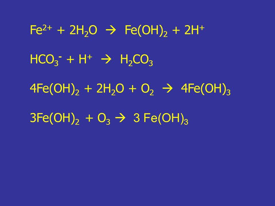Fe2+ + 2H2O  Fe(OH)2 + 2H+ HCO3- + H+  H2CO3.