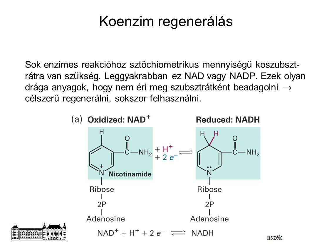 Koenzim regenerálás