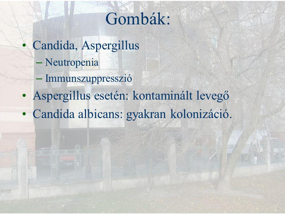 Gombák: Candida, Aspergillus Aspergillus esetén: kontaminált levegő