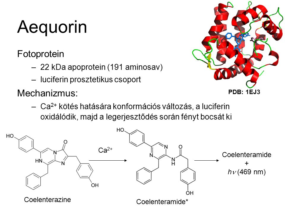 Aequorin Fotoprotein Mechanizmus: 22 kDa apoprotein (191 aminosav)