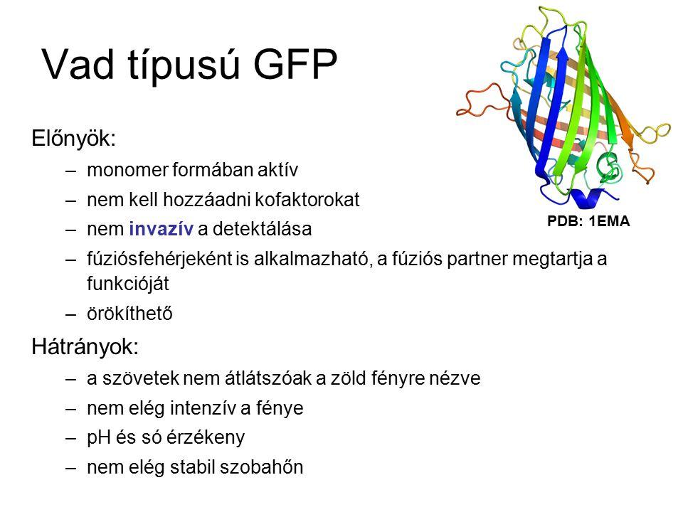 Vad típusú GFP Előnyök: Hátrányok: monomer formában aktív