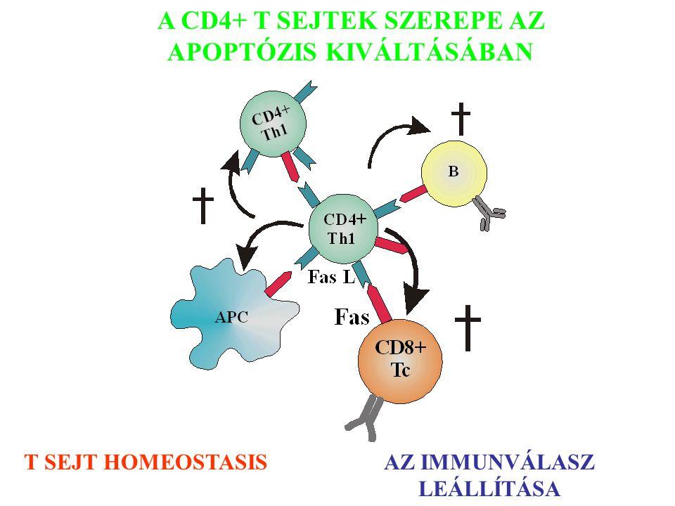 A CD4+ T SEJTEK SZEREPE AZ APOPTÓZIS KIVÁLTÁSÁBAN