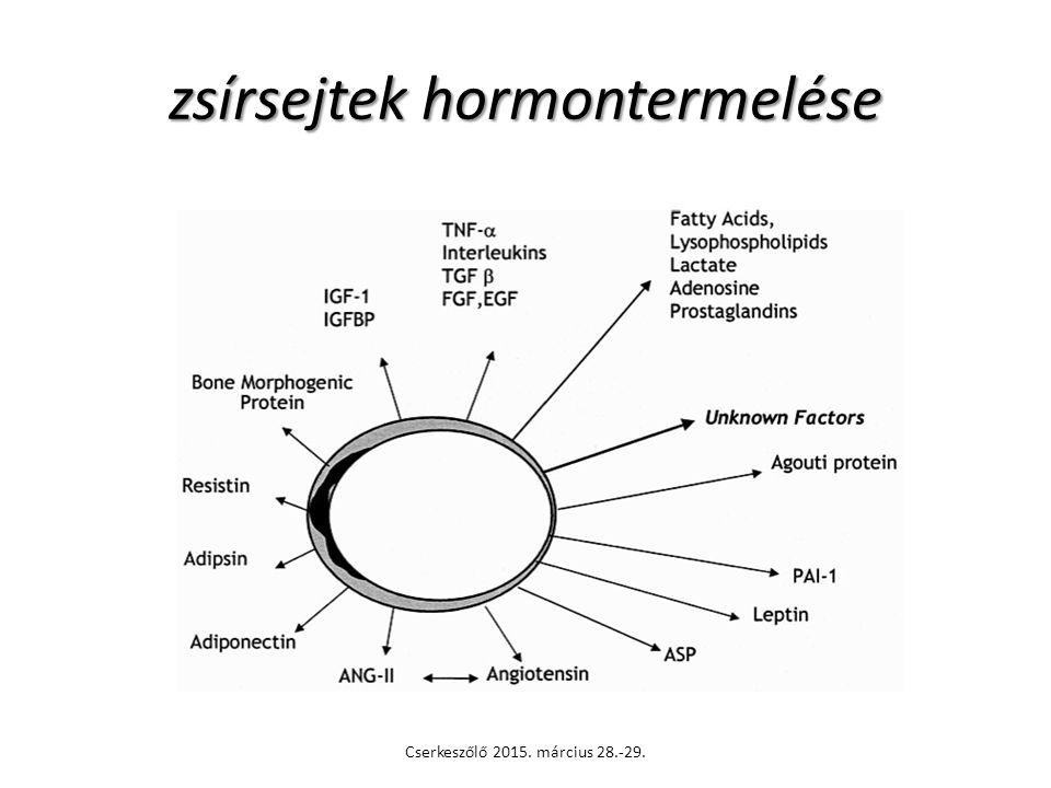 zsírsejtek hormontermelése