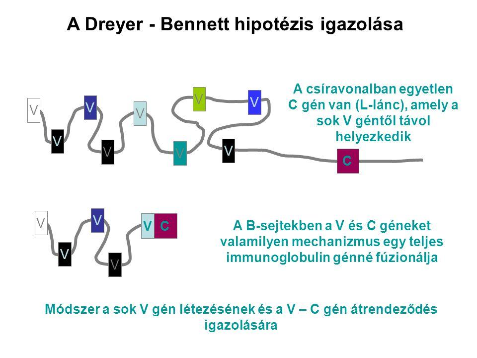 A Dreyer - Bennett hipotézis igazolása