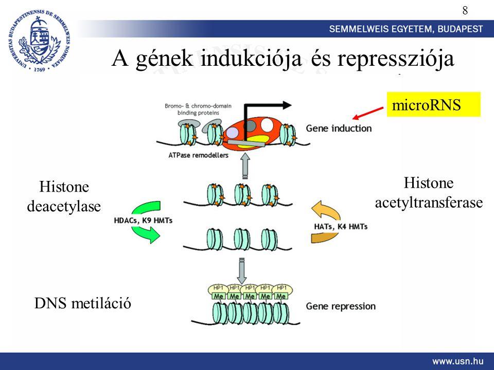 A gének indukciója és repressziója