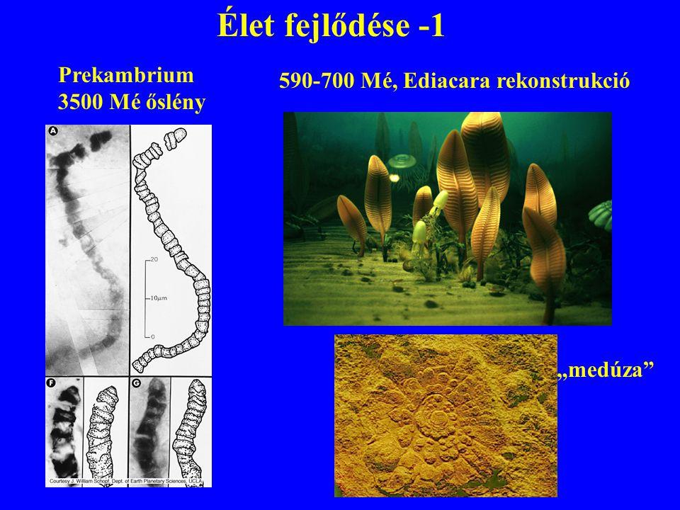 Élet fejlődése -1 Prekambrium 590-700 Mé, Ediacara rekonstrukció