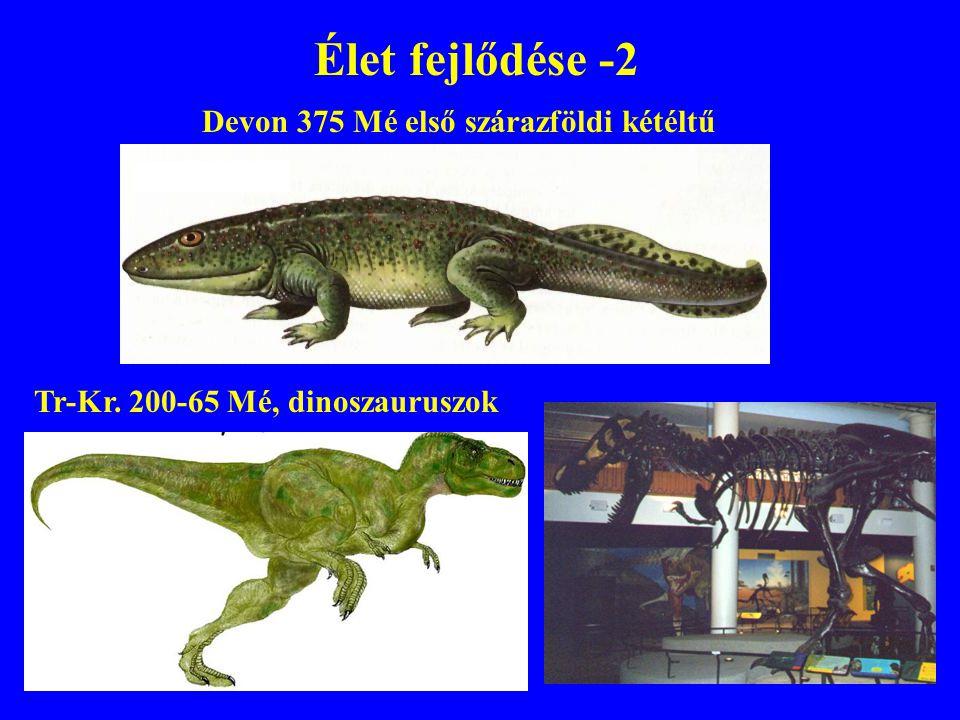 Élet fejlődése -2 Devon 375 Mé első szárazföldi kétéltű