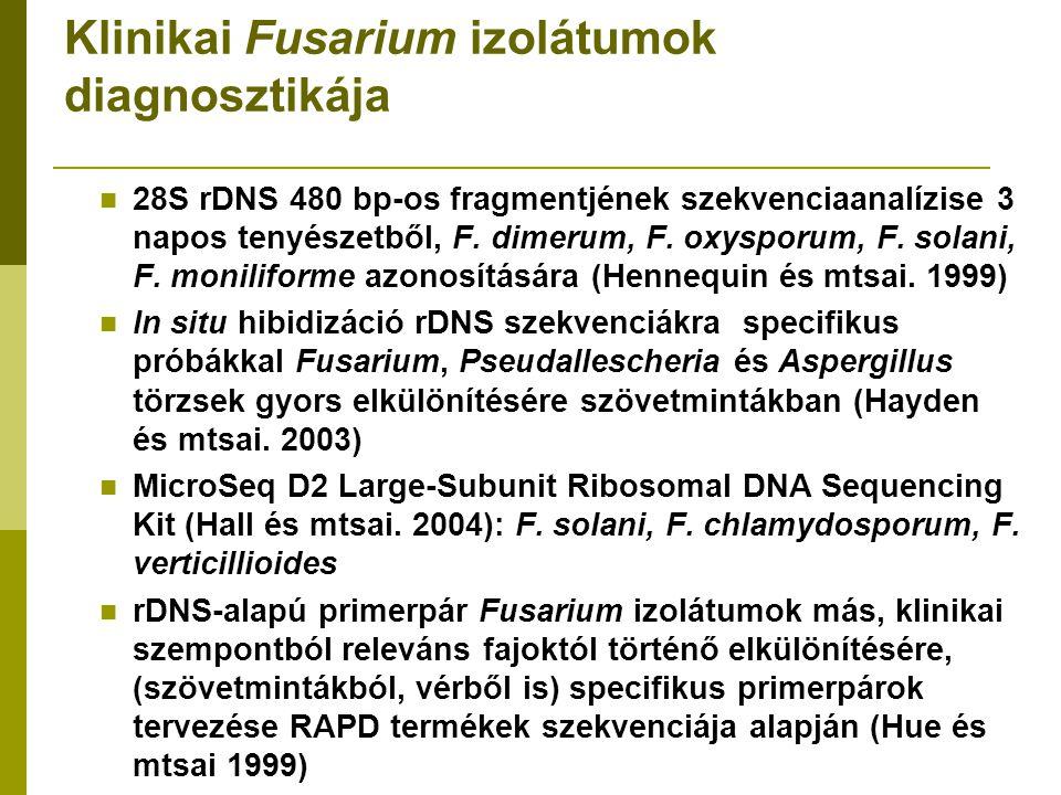Klinikai Fusarium izolátumok diagnosztikája