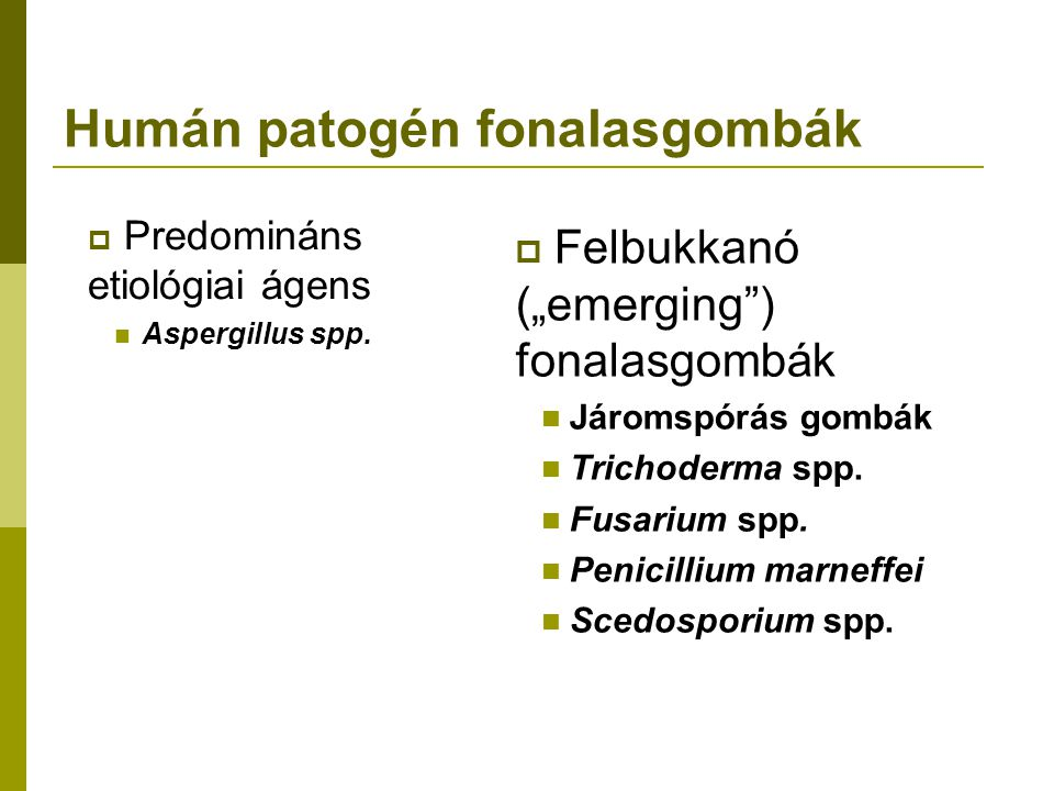 Humán patogén fonalasgombák