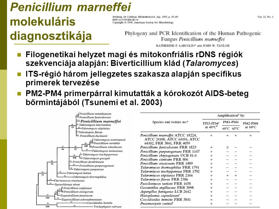 Penicillium marneffei molekuláris diagnosztikája