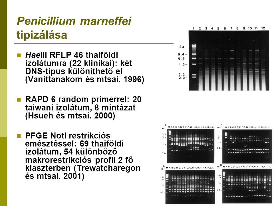Penicillium marneffei tipizálása