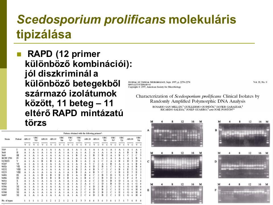 Scedosporium prolificans molekuláris tipizálása