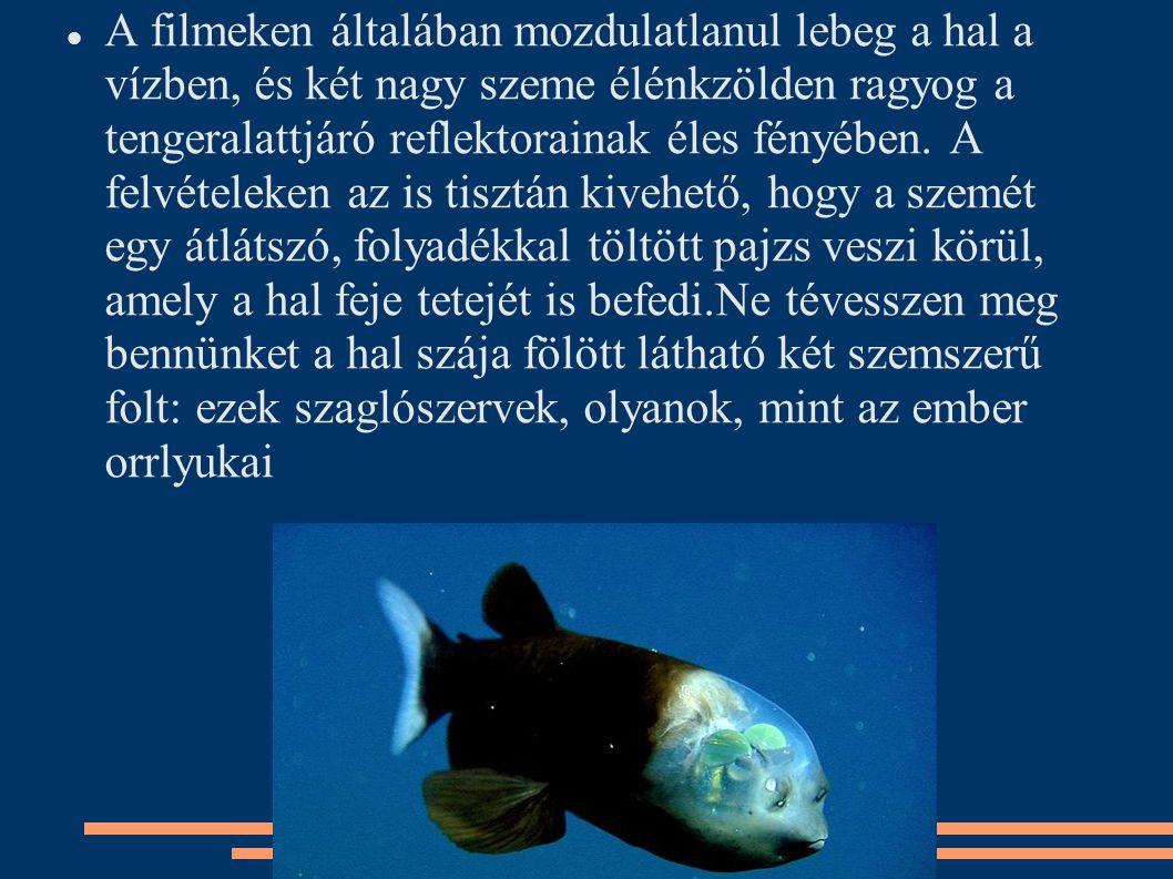 A filmeken általában mozdulatlanul lebeg a hal a vízben, és két nagy szeme élénkzölden ragyog a tengeralattjáró reflektorainak éles fényében.