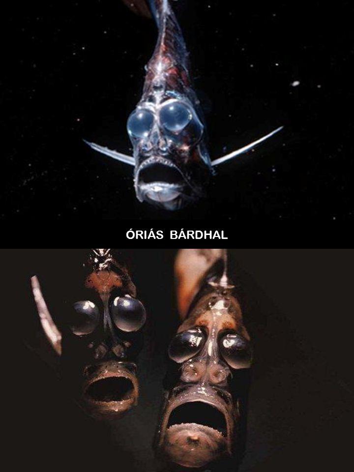 ÓRIÁS BÁRDHAL