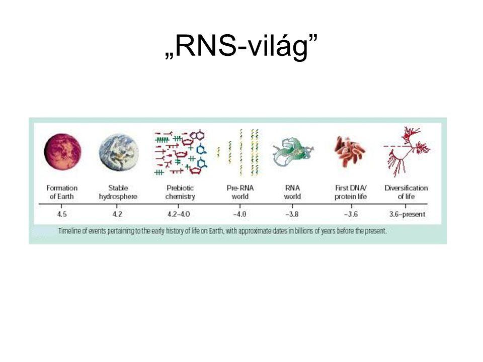 """""""RNS-világ"""