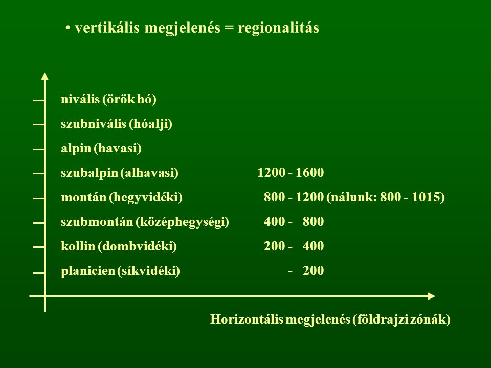 vertikális megjelenés = regionalitás