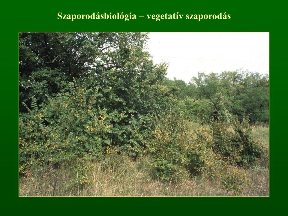Szaporodásbiológia – vegetatív szaporodás