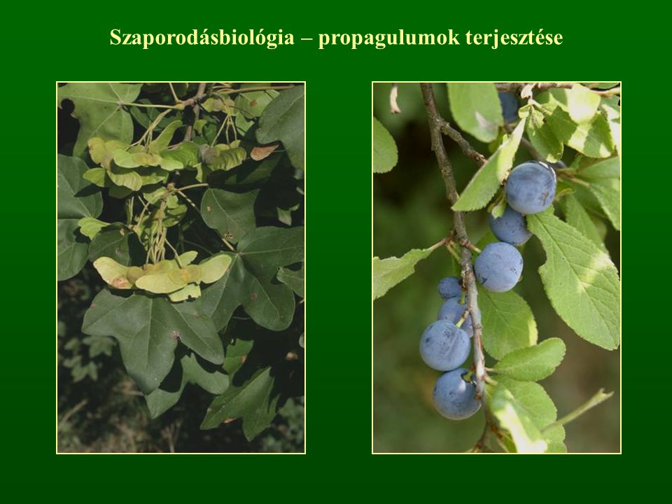 Szaporodásbiológia – propagulumok terjesztése