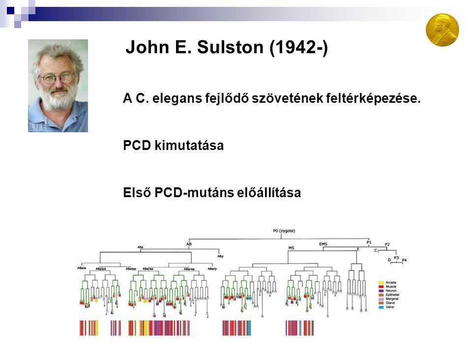 John E. Sulston (1942-) A C. elegans fejlődő szövetének feltérképezése.