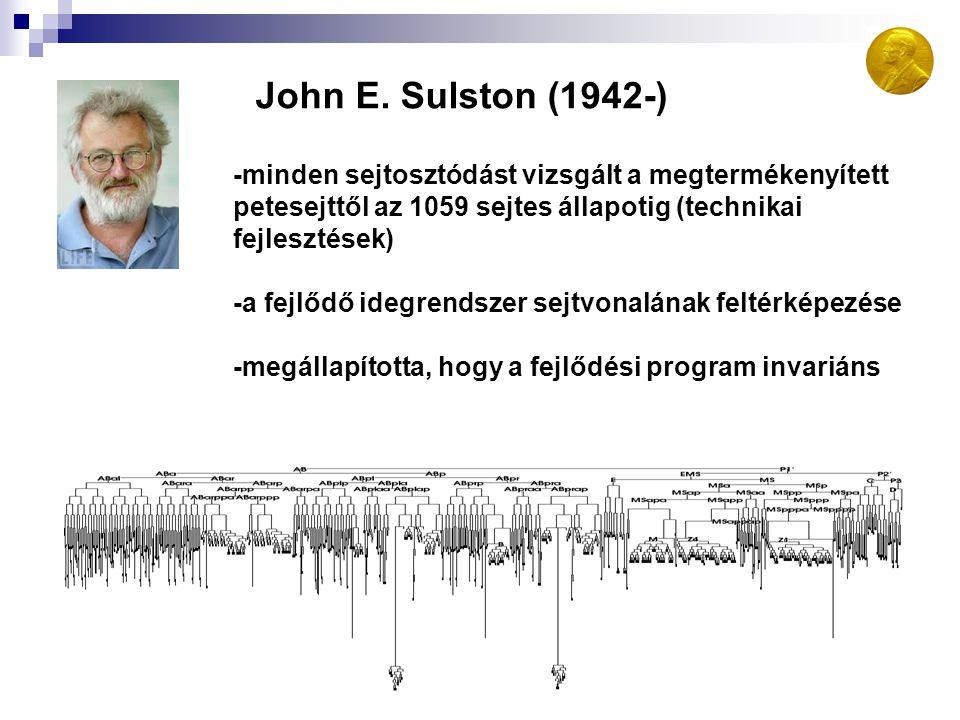 John E. Sulston (1942-) -minden sejtosztódást vizsgált a megtermékenyített. petesejttől az 1059 sejtes állapotig (technikai.