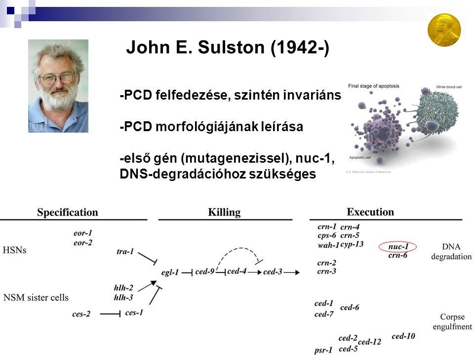 John E. Sulston (1942-) -PCD felfedezése, szintén invariáns