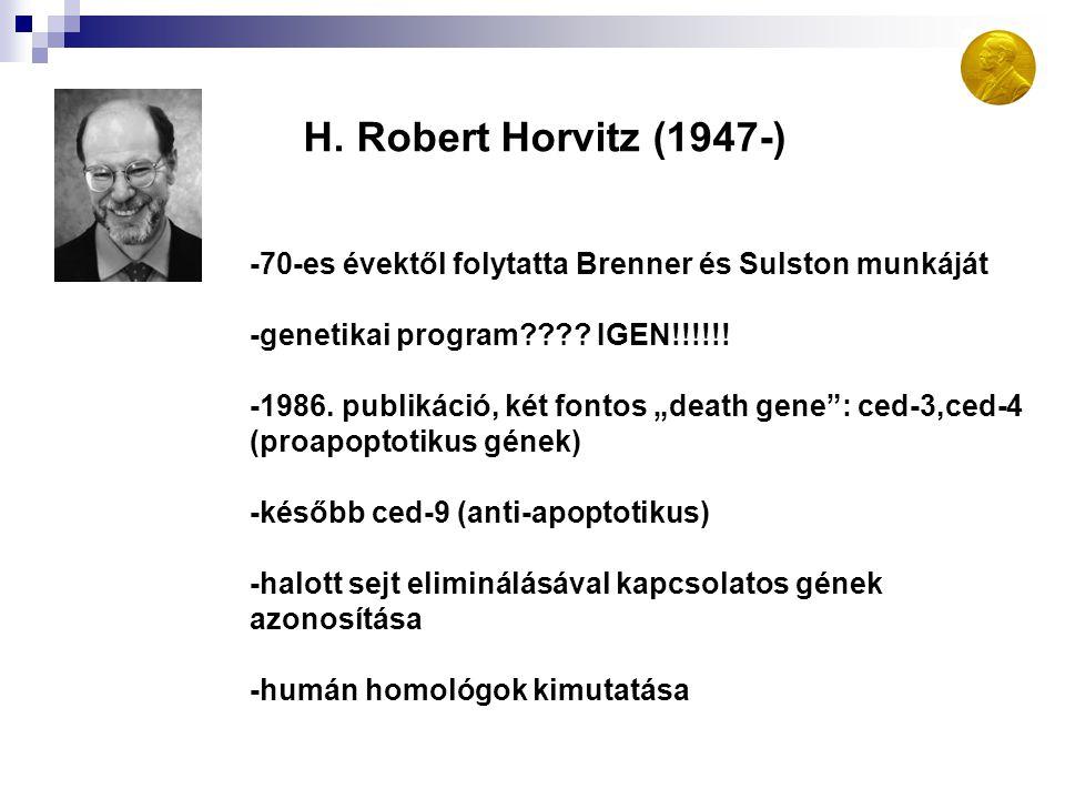 H. Robert Horvitz (1947-) -70-es évektől folytatta Brenner és Sulston munkáját. -genetikai program IGEN!!!!!!