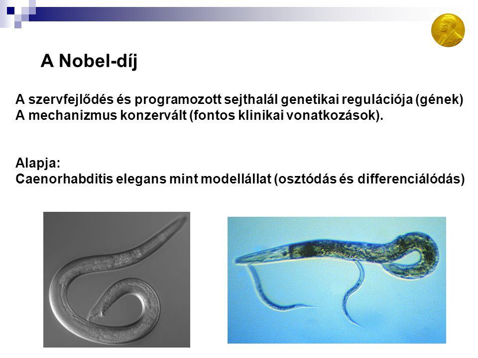 A Nobel-díj A szervfejlődés és programozott sejthalál genetikai regulációja (gének) A mechanizmus konzervált (fontos klinikai vonatkozások).