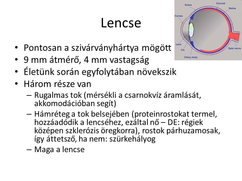 Lencse Pontosan a szivárványhártya mögött 9 mm átmérő, 4 mm vastagság
