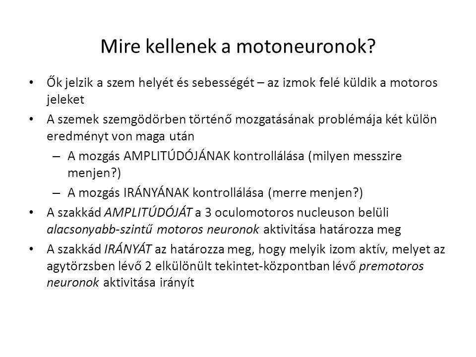 Mire kellenek a motoneuronok