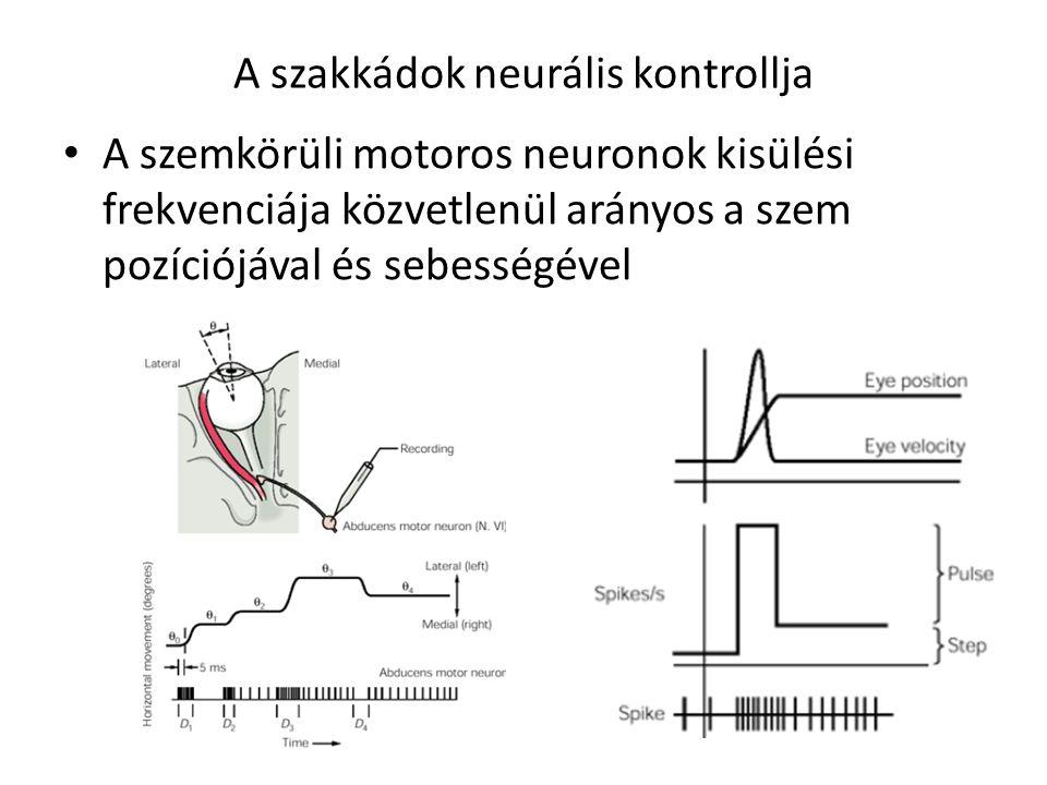 A szakkádok neurális kontrollja
