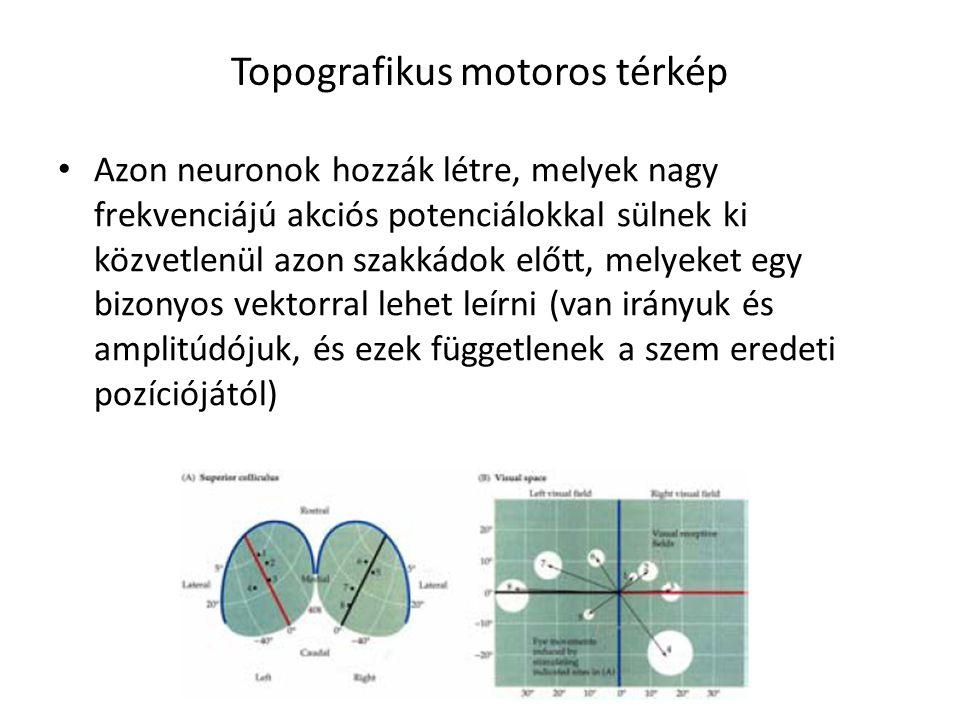 Topografikus motoros térkép