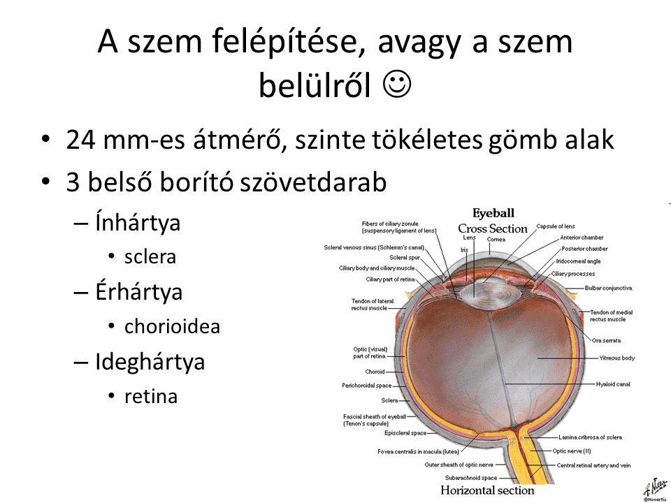 A szem felépítése, avagy a szem belülről 
