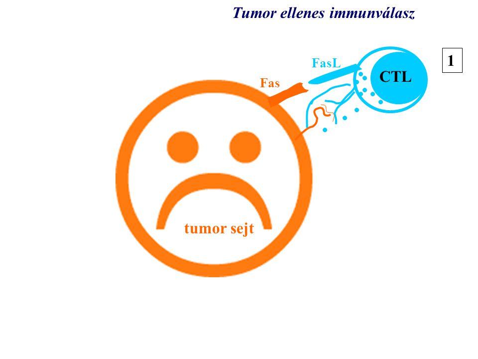 Tumor ellenes immunválasz