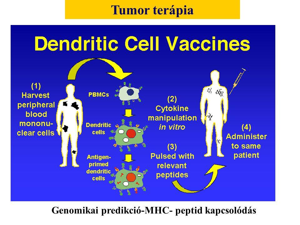 Tumor terápia Genomikai predikció-MHC- peptid kapcsolódás