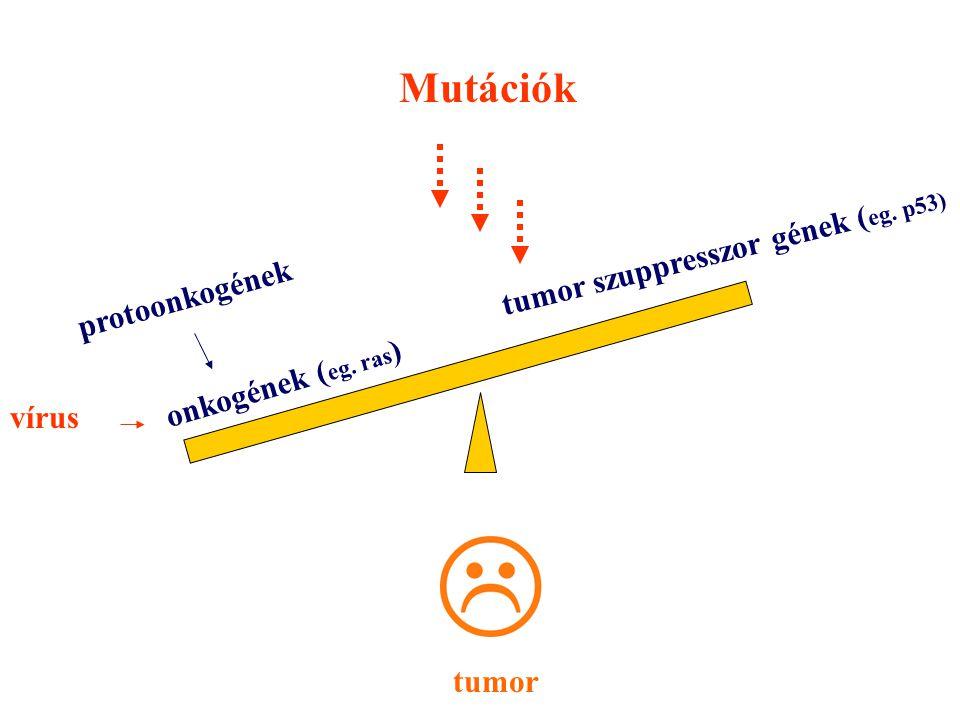 Mutációk tumor szuppresszor gének (eg. p53) protoonkogének